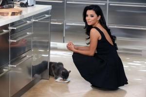 Eva Longoria amante de los gatos